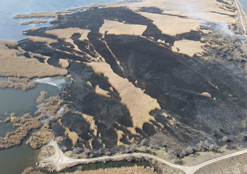 На Николаевщине выгорело 4 га камыша (ФОТО)