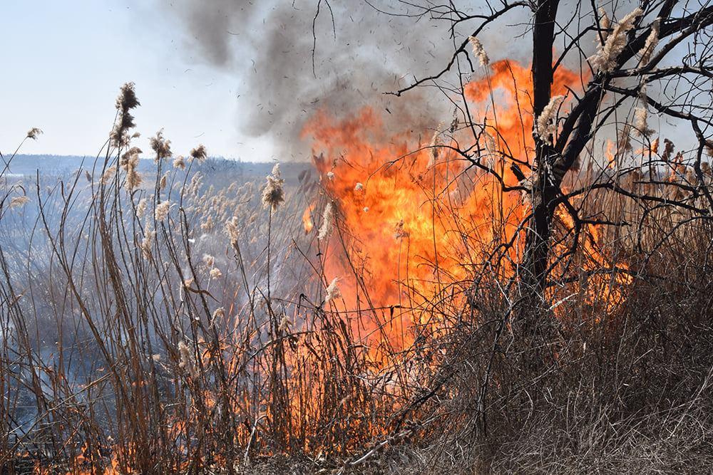 На Николаевщине выгорело 4 га камыша (ФОТО) 3