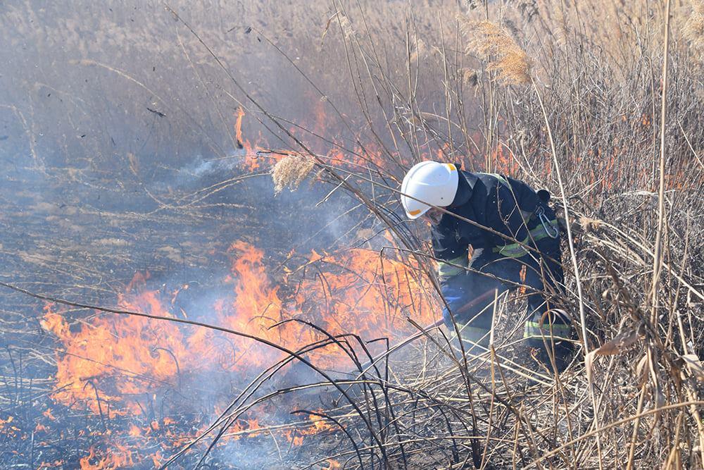 На Николаевщине выгорело 4 га камыша (ФОТО) 5