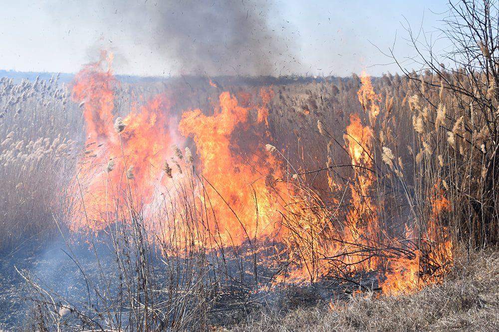 На Николаевщине выгорело 4 га камыша (ФОТО) 7