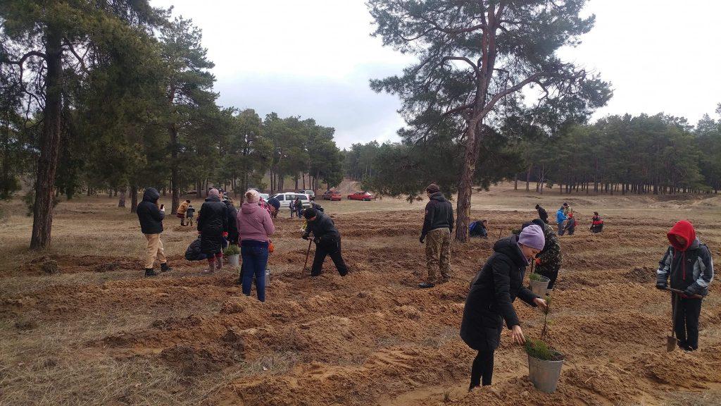 Жители Николаева высадили 2000 саженцев сосны в Матвеевском лесу (ФОТО) 5