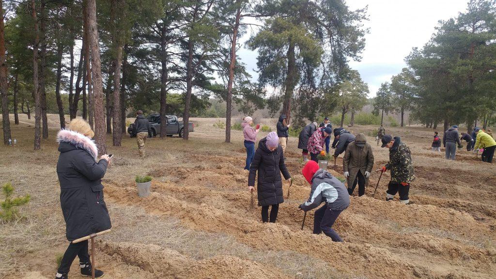 Жители Николаева высадили 2000 саженцев сосны в Матвеевском лесу (ФОТО) 1