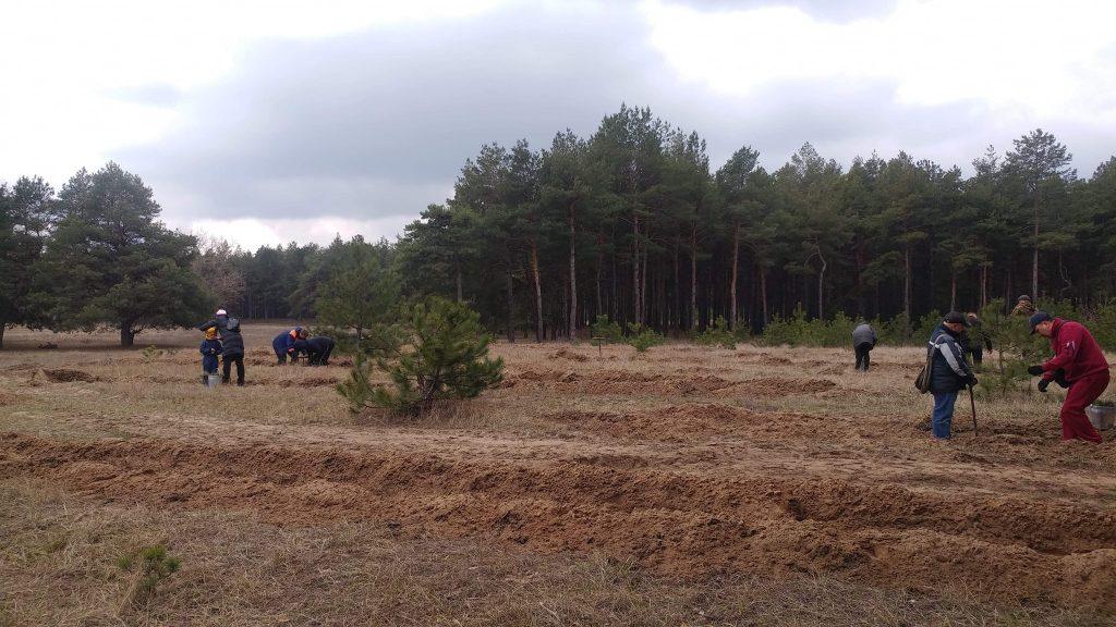 Жители Николаева высадили 2000 саженцев сосны в Матвеевском лесу (ФОТО) 3