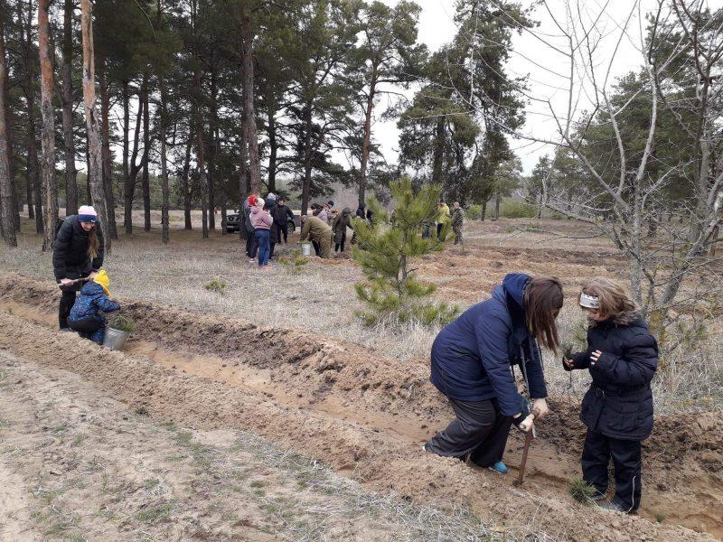 Жители Николаева высадили 2000 саженцев сосны в Матвеевском лесу (ФОТО)