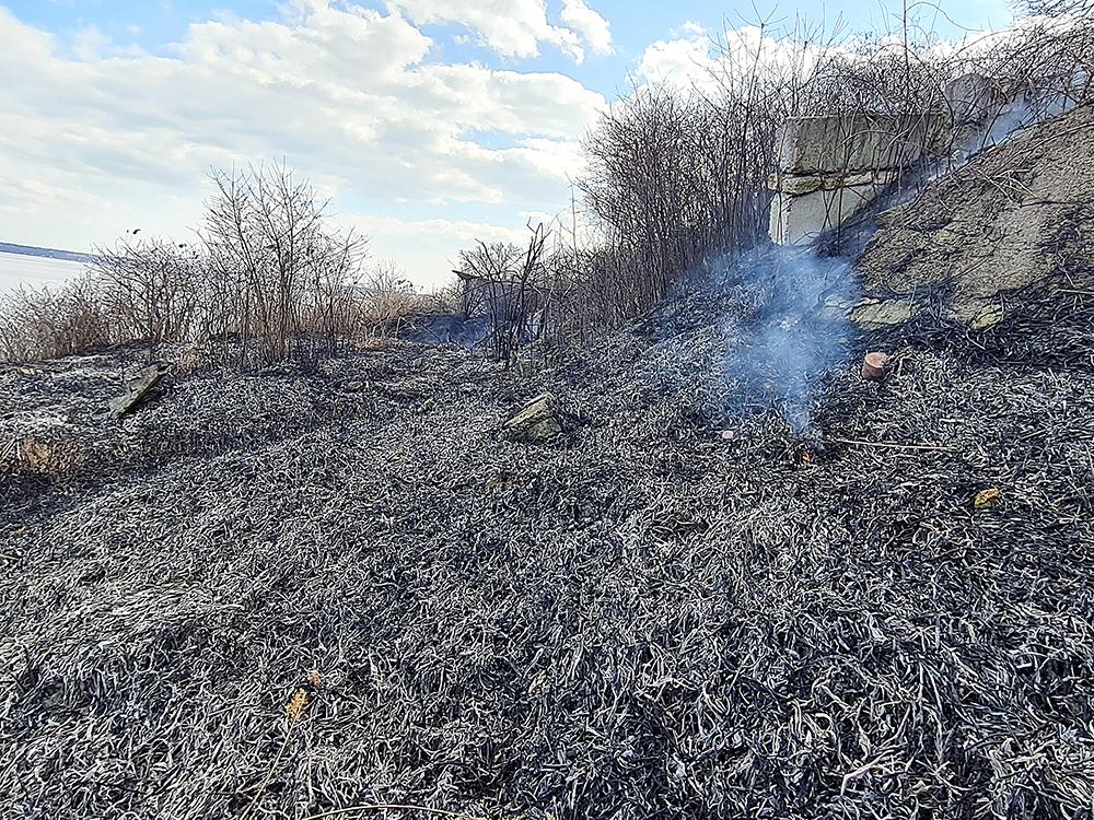 Опять жгут камыши. На Николаевщине выгорело свыше 6 га открытых территорий (ФОТО) 5