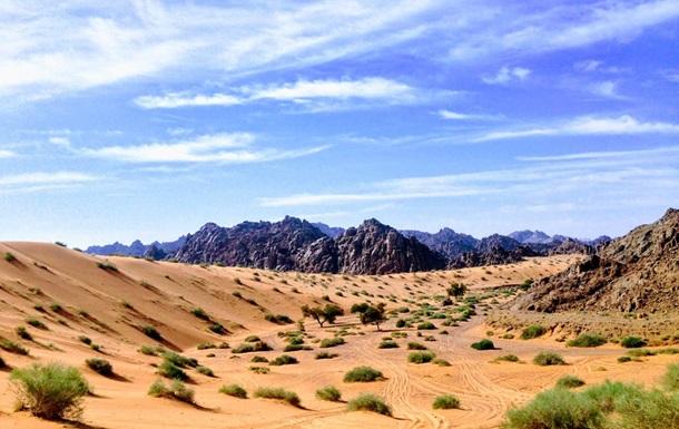 Саудовская Аравия собирается высадить 10 миллиардов деревьев на своей территории