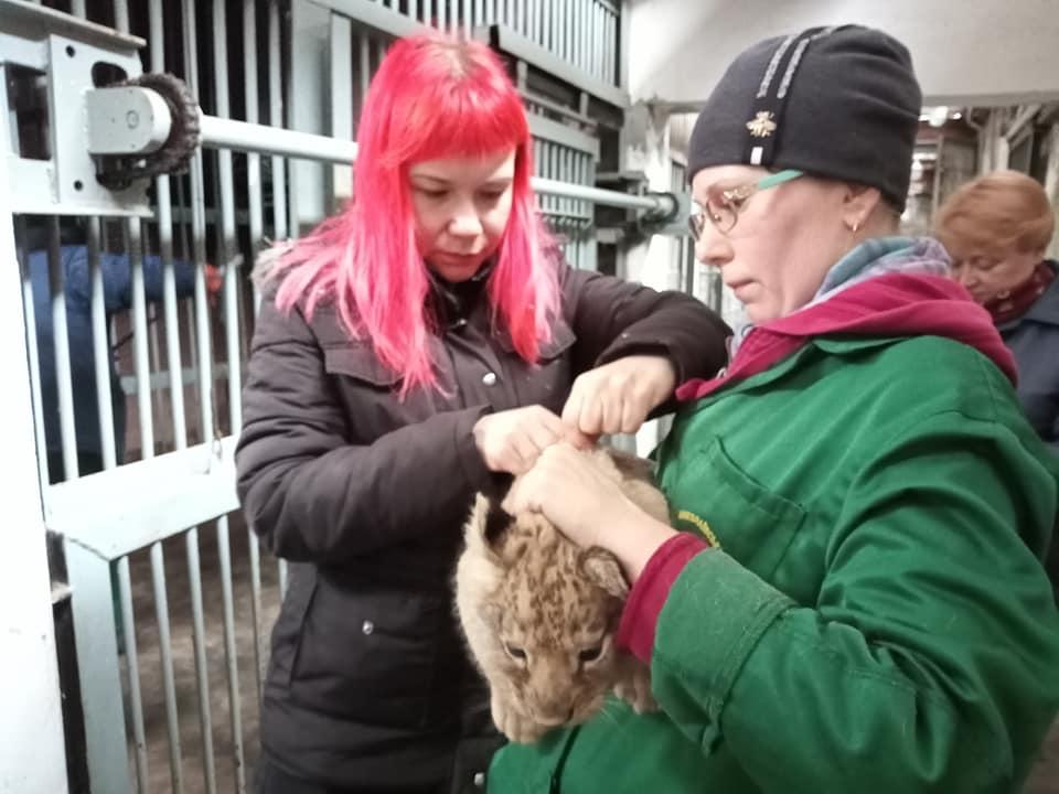 Ласковый и сердитая: в Николаевском зоопарке родились львята (ФОТО) 5