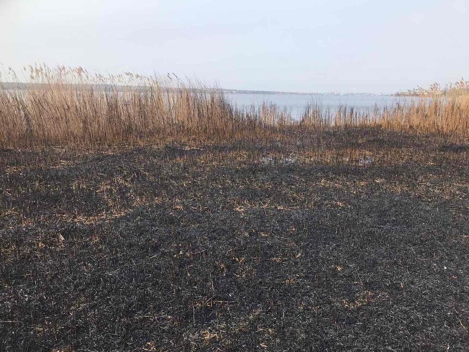 За сутки спасатели потушили 7 пожаров в экосистемах и хозпостройку (ФОТО) 7