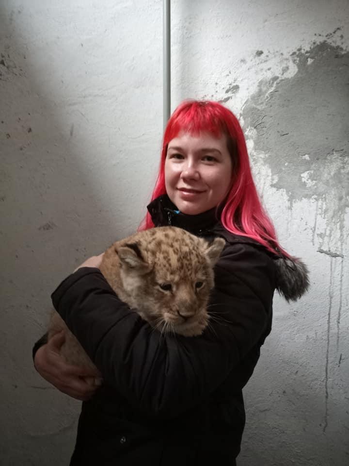 Ласковый и сердитая: в Николаевском зоопарке родились львята (ФОТО) 9