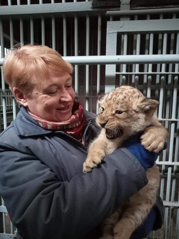 Ласковый и сердитая: в Николаевском зоопарке родились львята (ФОТО) 11