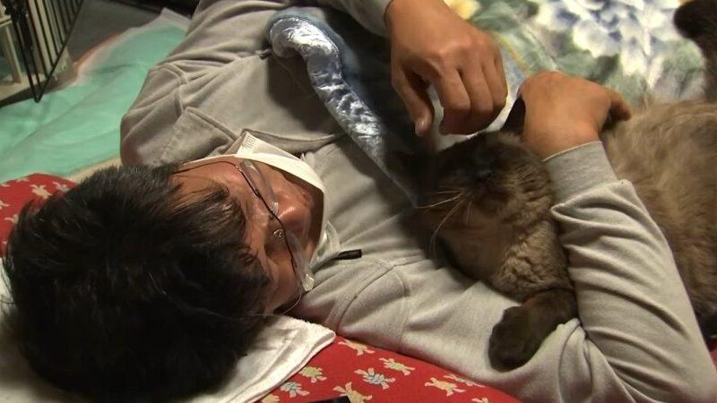 Мужчина остался в зараженной зоне Фукусимы, чтобы кормить котов (ВИДЕО)