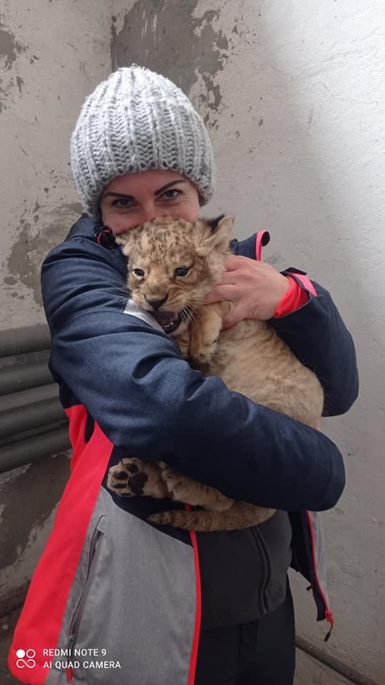 Ласковый и сердитая: в Николаевском зоопарке родились львята (ФОТО) 13