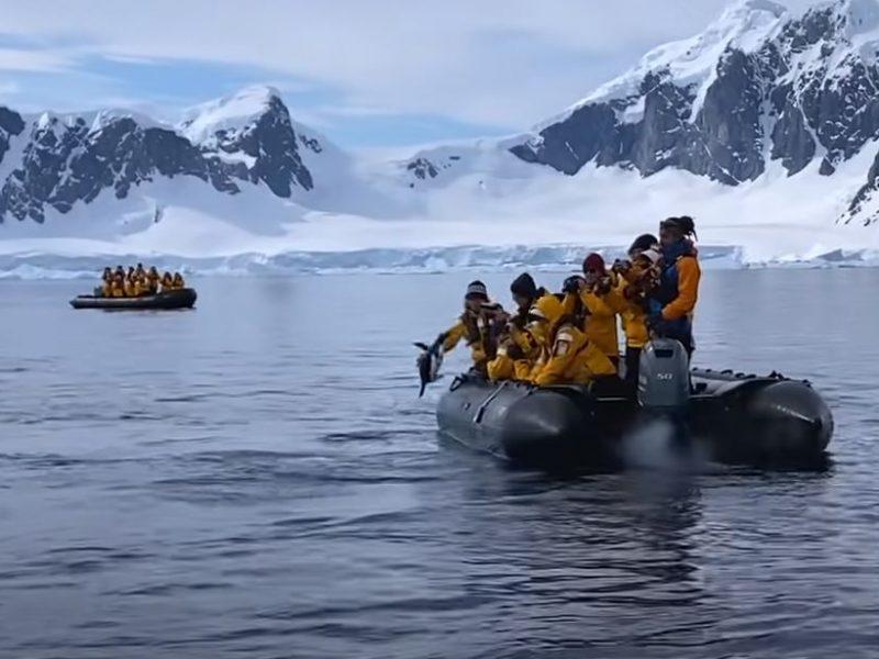 В Антарктиде пингвин спасся от касатки в лодке с туристами (ВИДЕО)