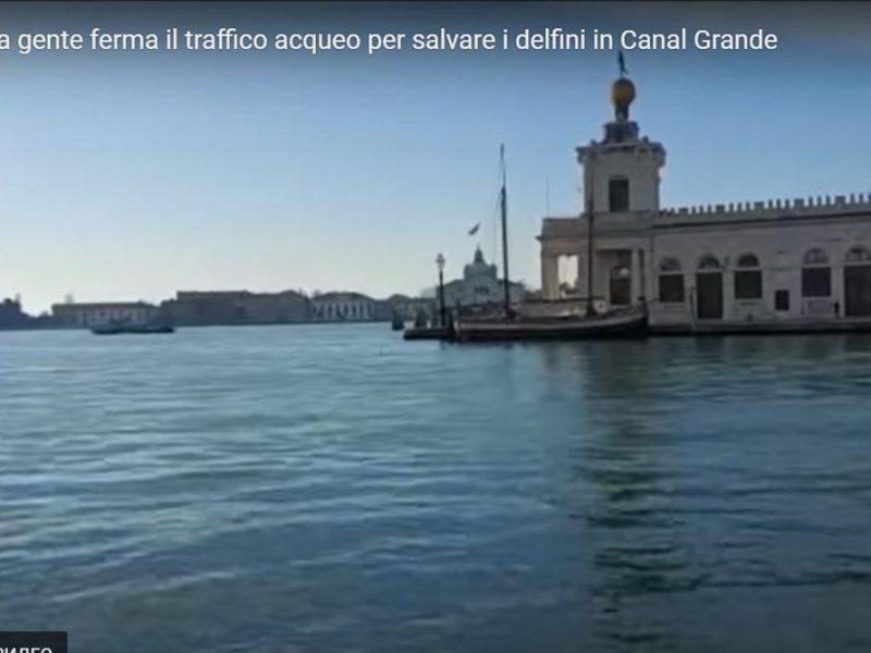В каналы Венеции заплыли дельфины – прямо к площади Сан-Марко (ВИДЕО)