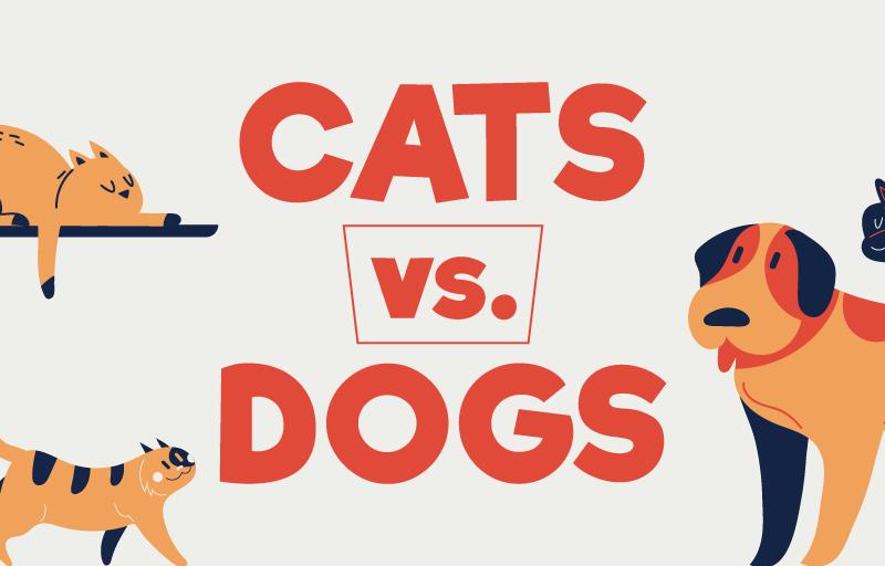 Кошки или собаки: SMM-специалисты подсчитали, кого больше любят в разных странах мира (ИНФОГРАФИКА)