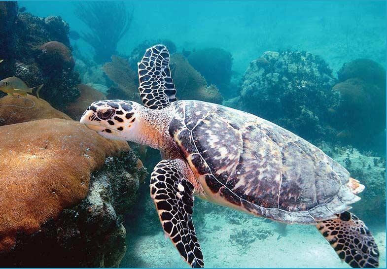 На Мадагаскаре 19 человек погибли, съев черепах. Говорят, виноваты ядовитые водоросли