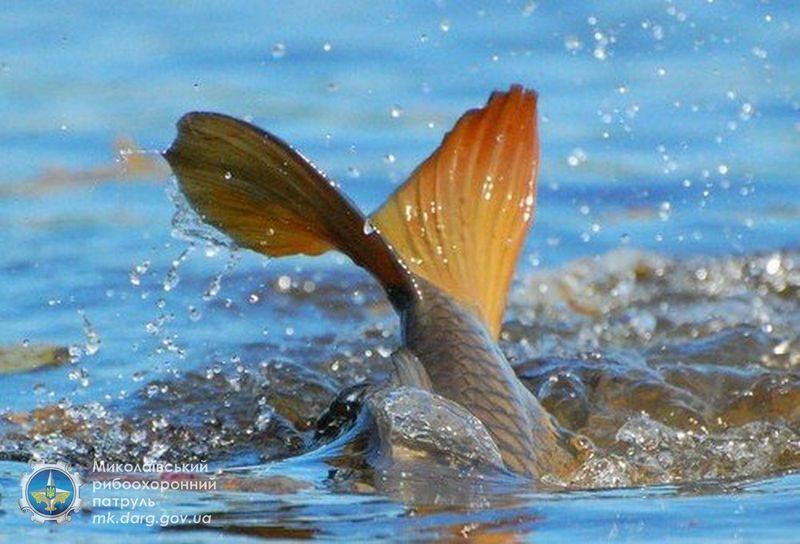 Рыба идет на нерест: c 1 апреля в Николаевской области на водоемах действует запрет (ИНФОГРАФИКА)