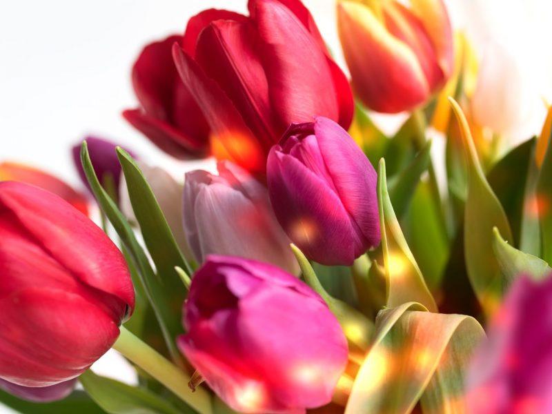 Без вас мы биосущества, с вами – люди, – Зеленский поздравил женщин с 8 Марта
