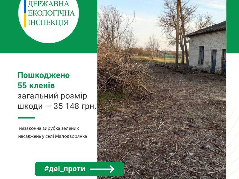 На Николаевщине спилили 55 кленов – Госэкоинспекция обратилась в полицию