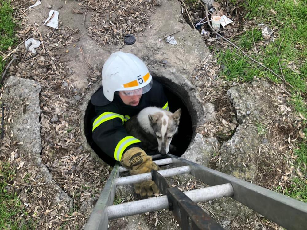 В Николаеве спасатели вытащили из колодца собаку - выла страшно (ФОТО) 1