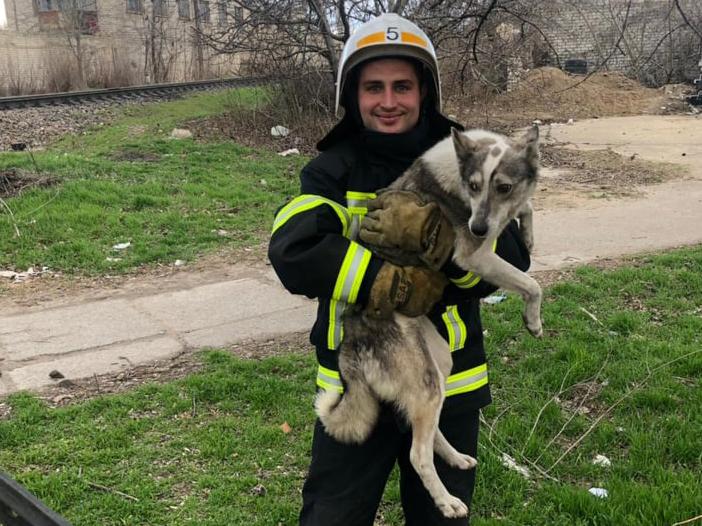 В Николаеве спасатели вытащили из колодца собаку – выла страшно (ФОТО)