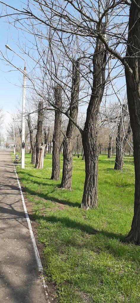 В Николаеве втрое увеличили вырубку деревьев и в 20 раз - обрезку (ФОТО) 3