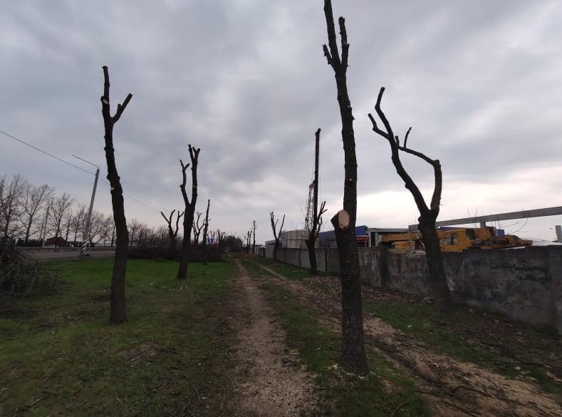 В Николаеве втрое увеличили вырубку деревьев и в 20 раз - обрезку (ФОТО) 5