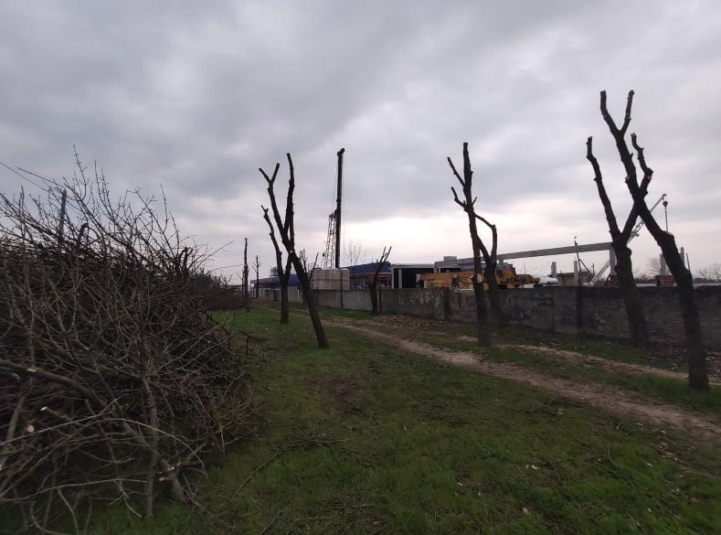 В Николаеве втрое увеличили вырубку деревьев и в 20 раз - обрезку (ФОТО) 7