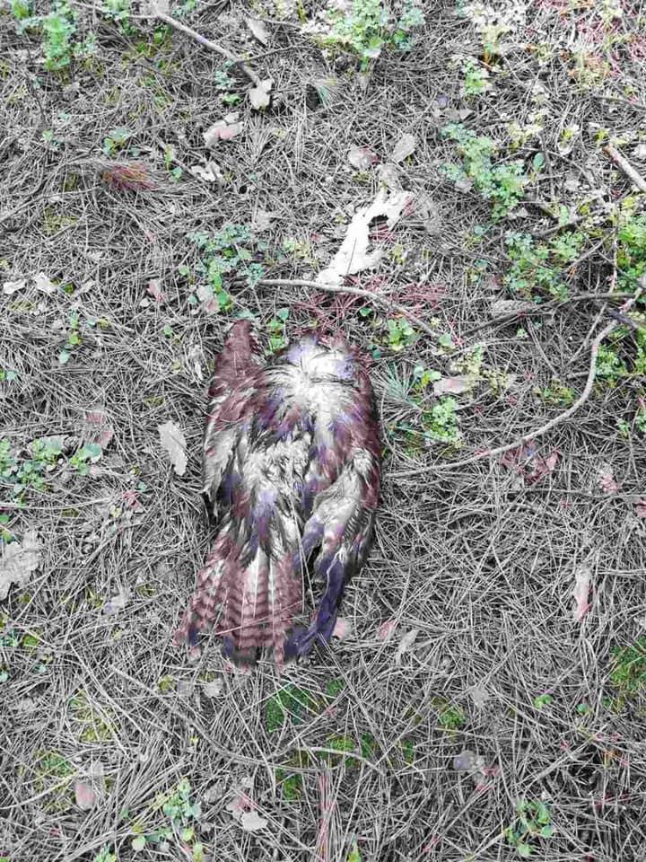 На окраине Николаева нашли умерших от птичьего гриппа диких птиц (ФОТО) 1