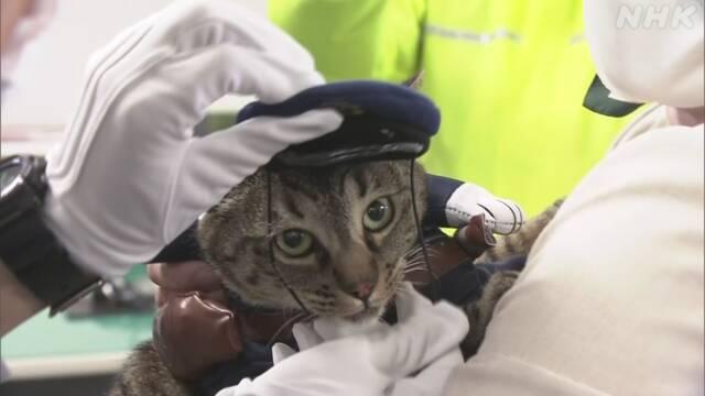 Кошка, награжденная грамотой за спасение жизни, стала на день начальником полиции японского города (ФОТО)