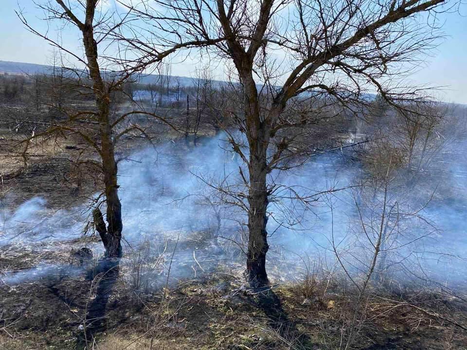 Спасатели Николаевщины потушили 4 га горящего леса (ФОТО) 9