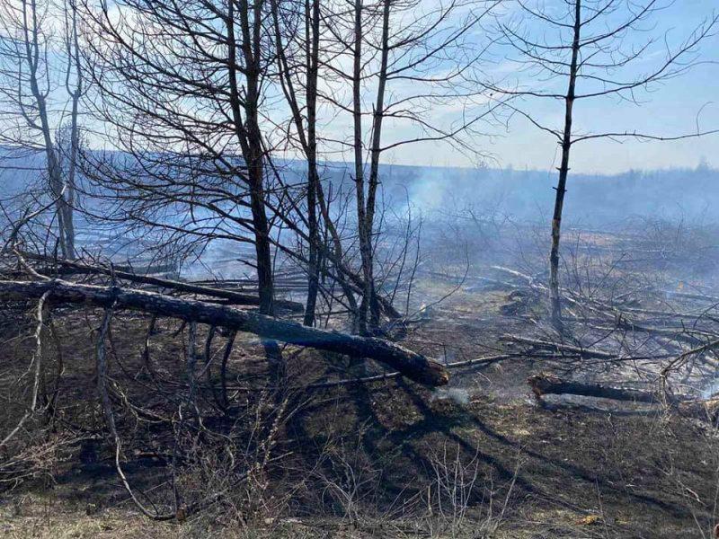 На Николаевщине за сутки выгорело более 9,2 га открытых территорий