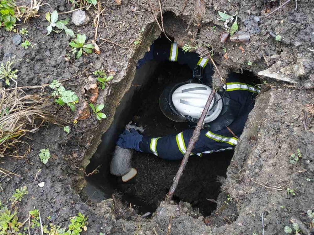 Во Врадиевке спасатели вытащили щенка из выгребной ямы (ФОТО) 3