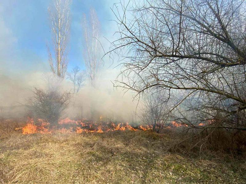 Спасатели Николаевщины потушили 4 га горящего леса (ФОТО)