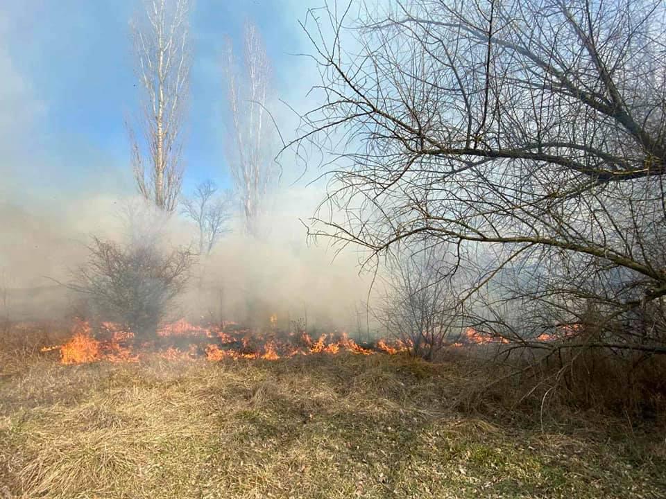 Спасатели Николаевщины потушили 4 га горящего леса (ФОТО) 1