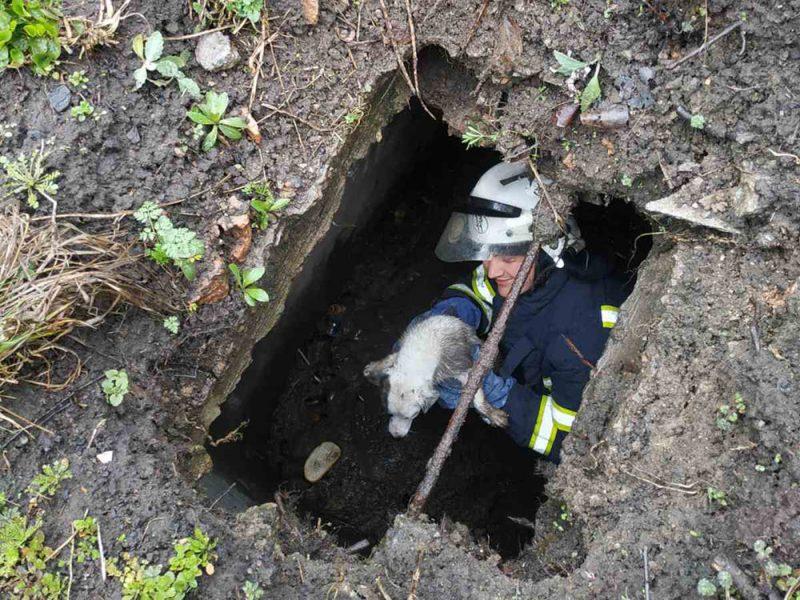 Во Врадиевке спасатели вытащили щенка из выгребной ямы (ФОТО)