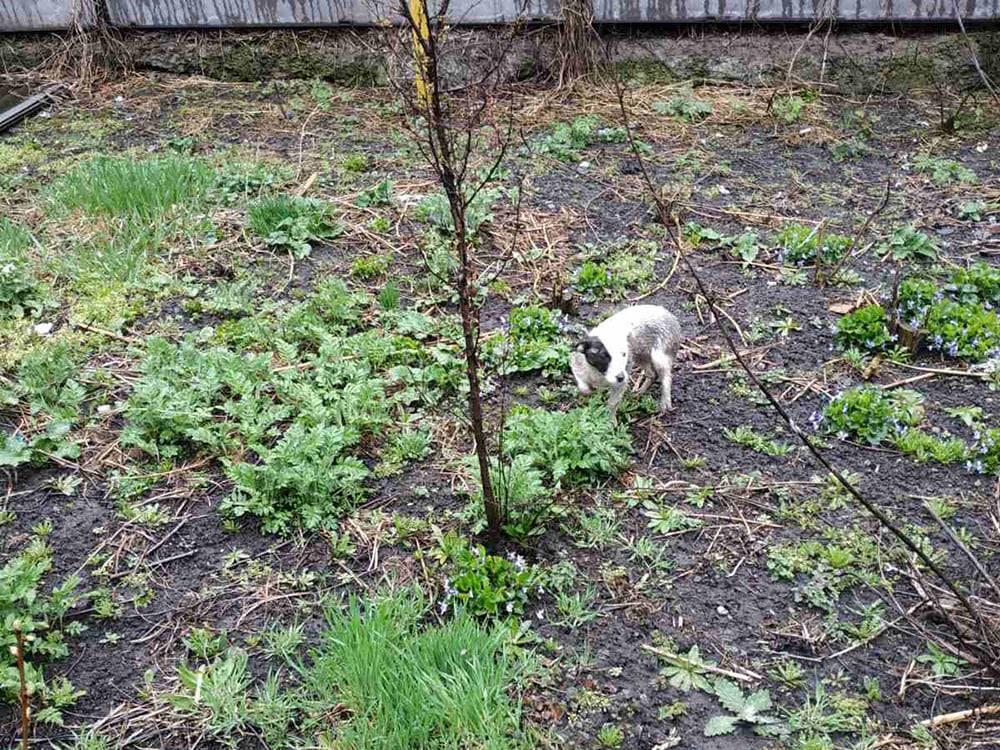 Во Врадиевке спасатели вытащили щенка из выгребной ямы (ФОТО) 7