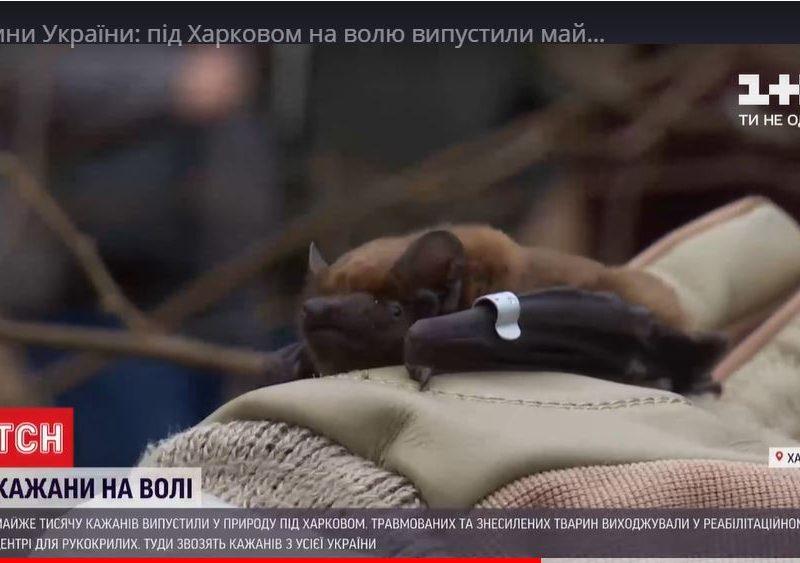 Амнистия. В Харькове выпустили на свободу тысячу спасенных летучих мышей (ВИДЕО)
