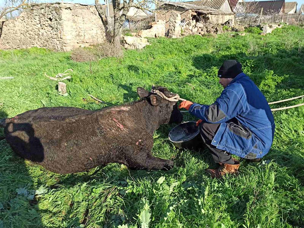 На Николаевщине бык упал в глубокий колодец. Пришлось вызывать спасателей (ФОТО) 7