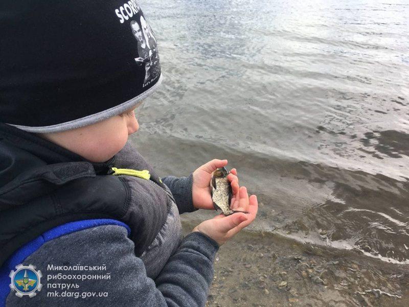 На Николаевщине выпустили в Южный Буг 160 тысяч мальков карпа и белого амура