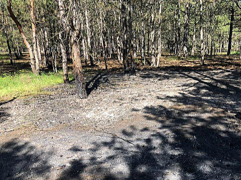 Спасатели Николаевщины оперативно потушили возгорание в Балабановском лесу (ФОТО)