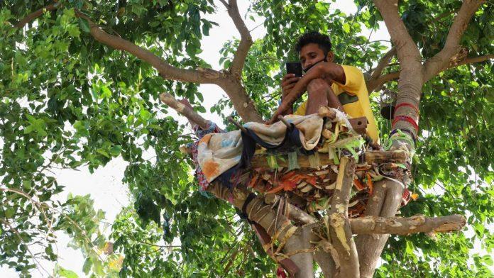 Индийский студент с COVID-19 самоизолировался на дереве – чтобы не заразить близких (ФОТО)
