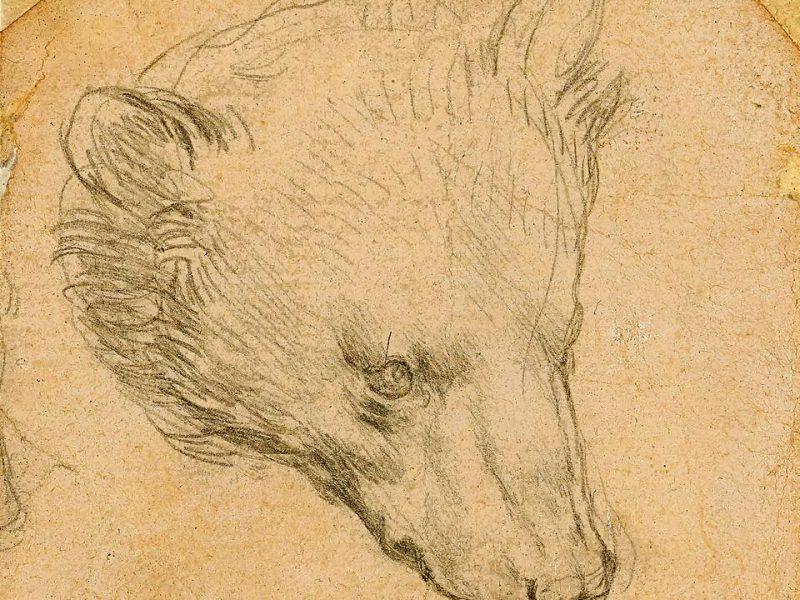 Медведя Леонардо да Винчи хотят продать за £12 млн