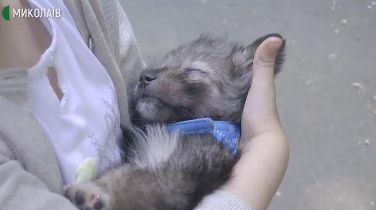 «Счастье не имеет породы»: в Николаеве за два дня нашли дом для почти 20 бездомных собак (ВИДЕО)