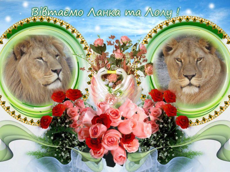 На двоих — «десятка»: в Николаевском зоопарке снова именинники — пара львов