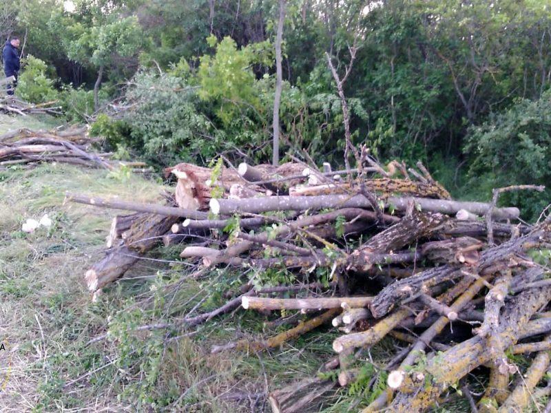 Все тот же Вознесенский район: снова незаконная порубка деревьев в лесополосах (ФОТО)