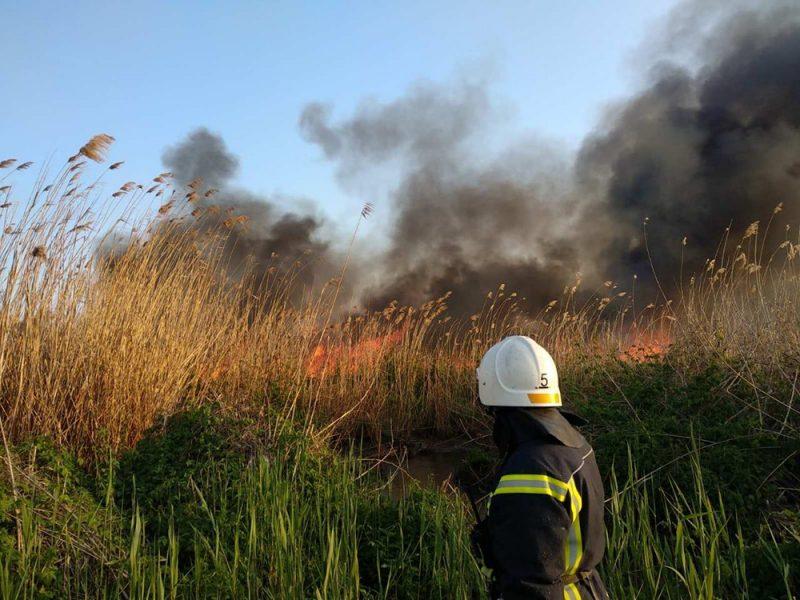 На окраине Николаева несколько часов тушили 2 га камышей – их подожгли (ФОТО)