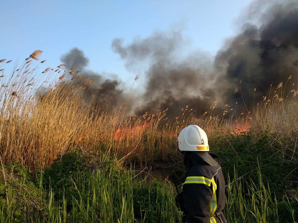 На окраине Николаева несколько часов тушили 2 га камышей – их подожгли (ФОТО) 3