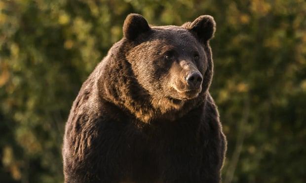 Экоативисты обвинили принца Лихтенштейна в убийстве самого большого медведя Европы