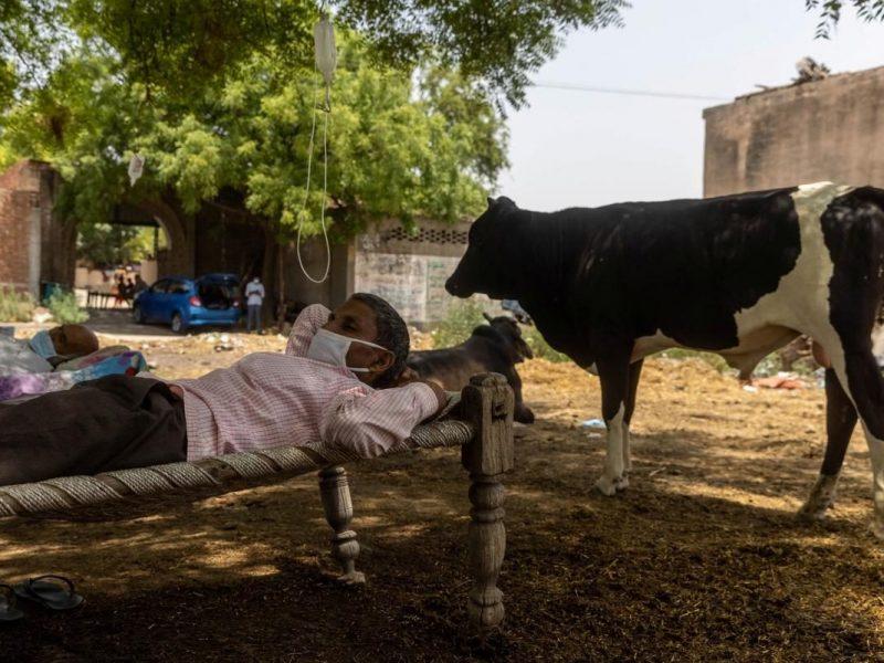 Лазарет под открытым небом. В Индии больных COVID-19 лечат на улице – капельницы висят на деревьях (ФОТО, ВИДЕО)
